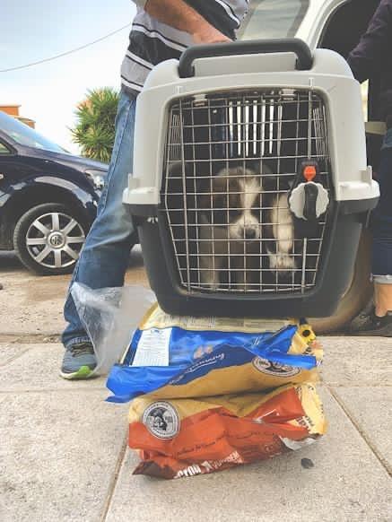 Welpen Griechenland Tierhilfe